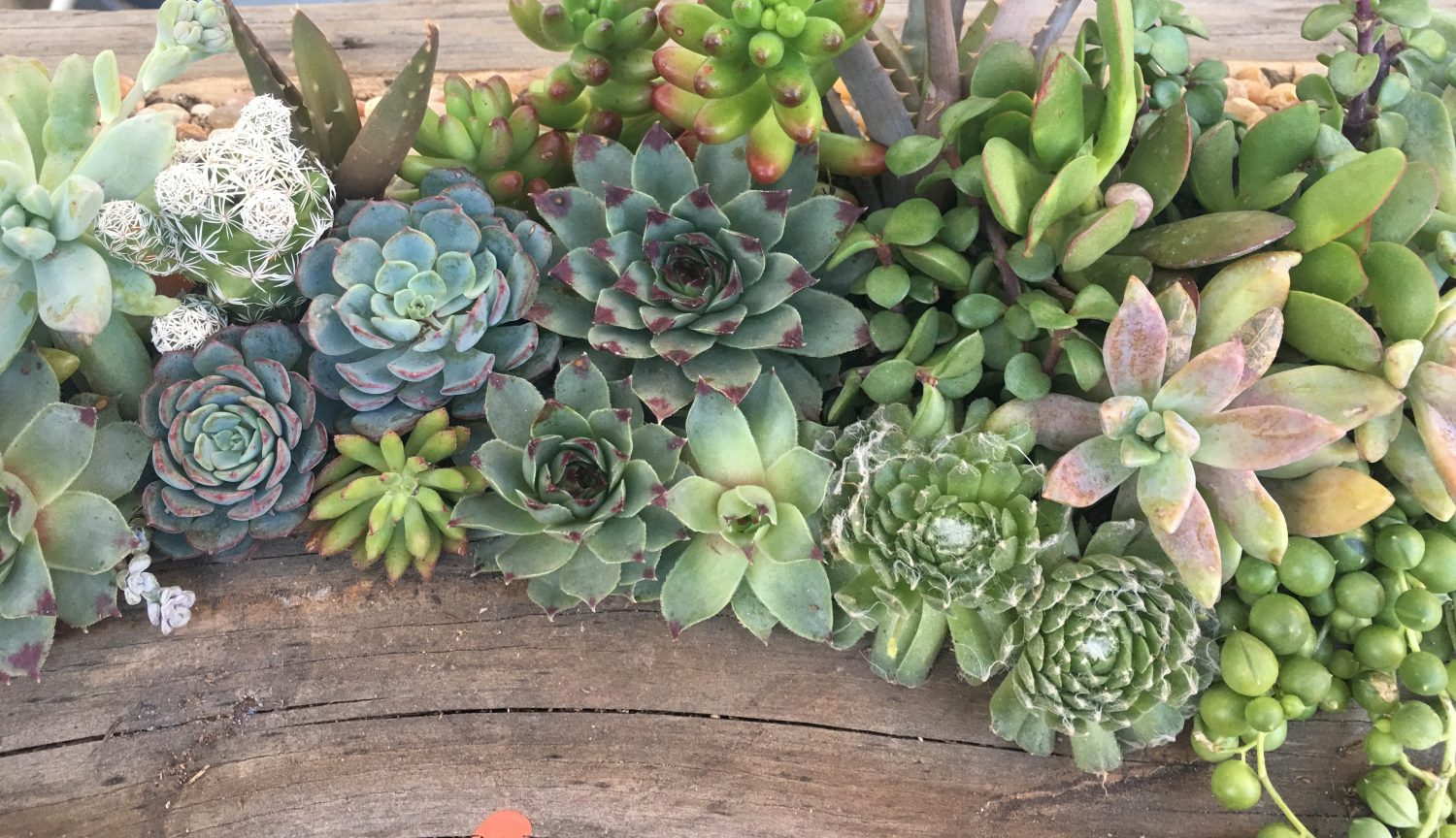 CLEAN: Succulent Design and Installation
